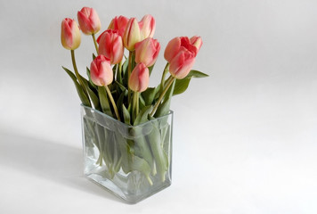 Spring flower  tulips bouquet