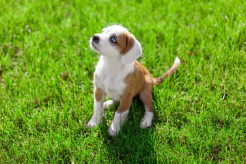 Curious little puppy sitting on the green grass