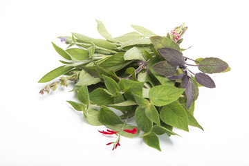 Sage mix isolated on white background