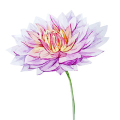 Watercolor dahlia flowers