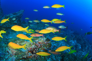 Fish and Coral Reef underwater