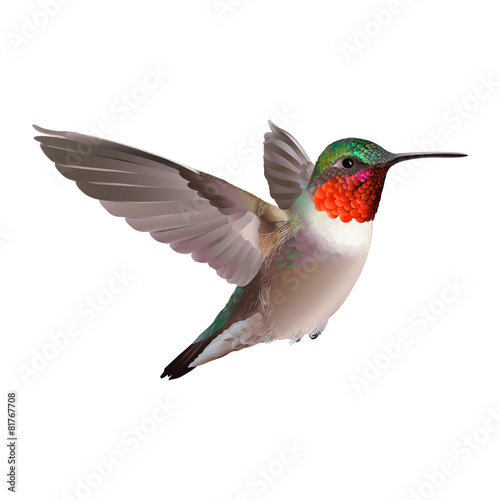 Colorful hummingbirds flying - photo#20