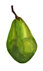 A watercolor drawing of a green pear, isolated