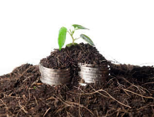 coins and plant - money growth concept. Dark background