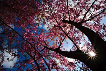 Poster Crimson Blue sky and pink flower.