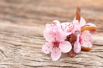 cherry blossom sakura on rustic wooden