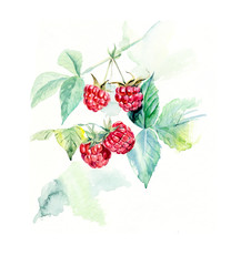 Branch raspberry. Forest miniatures.