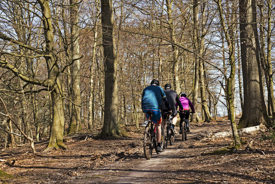 Mtb in a beech forest