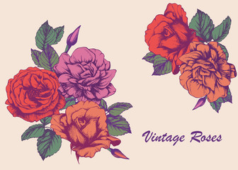 Highly detailed hand-drawn roses. Vectorial isolated elements.