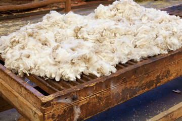 Fresh sheared wool