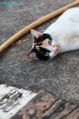 Cat on a floor, Selective focus.