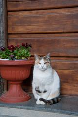 gatto sulla porta