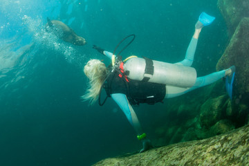 beautiful blonde girl playing with sea lion underwater