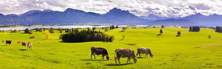 Wall Mural - Panorama Landschaft in Bayern mit Alpen am Forggensee
