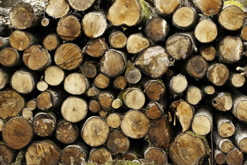 Stack of sawn trees, tree background