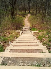 A foot path leads into the woods along a hiking trail.