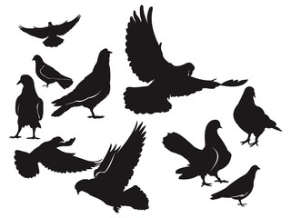 Dove - Pigeon Silhouette Package