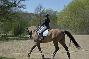 dressage cheval