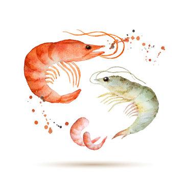Watercolor shrimp