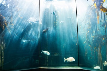 Sea life in a beautiful illuminating tank