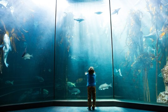 Young man looking at penguins in a tank
