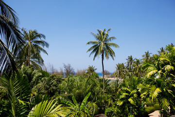 Tropical background with coconut palms