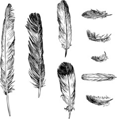 set of plumes