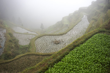 Rice Terrace Field - Remote China