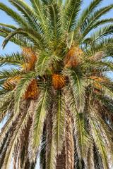View of coconut palms in Montenegro, Balkans