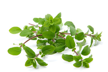 Bunch of marjoram