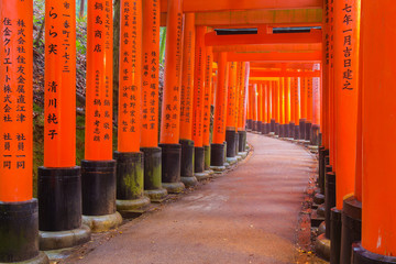 Fushimi Inari Shrine in Kyoto, Japan. Wall mural