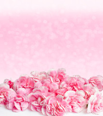 Pink flowers with dew drops on blur background