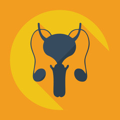 Flat modern design with shadow icons male reproductive system