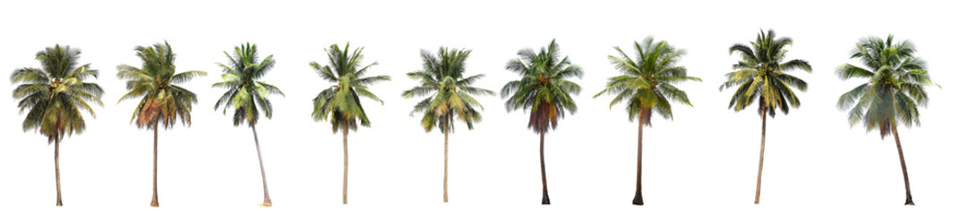 Fotorolgordijn Palm boom Difference of coconut tree isolated on white.