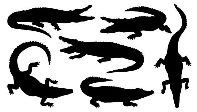 crocodile silhouettes