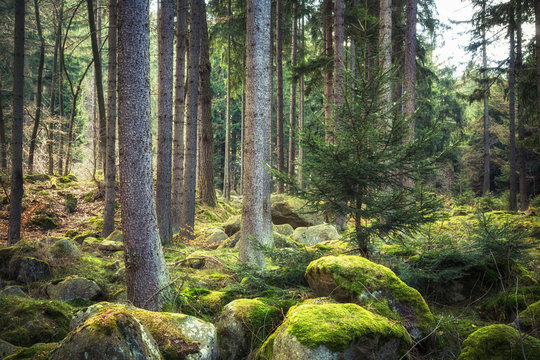 Der steinerne Wald im Harz