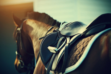 Fotobehang Paardrijden Saddle with stirrups on a back of a horse