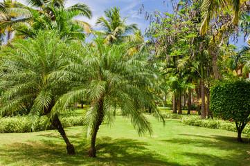 Green exotic garden. dominican republic. Pathway in tropical