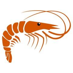 Shrimp - illustration