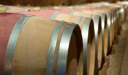 winery  with new wooden barrels