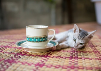 coffee cup  retro with kitten