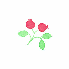 Watercolor cranberry on the white background, aquarelle. Vector