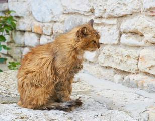 red homeless cat