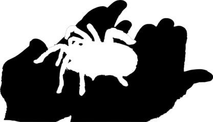 Spinne - Spinnenphobie