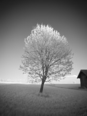 infrared photography landscape