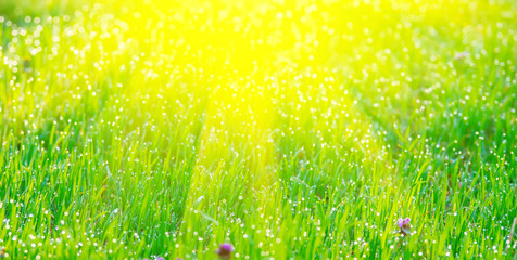 The sun's rays from above and green grass with dew.