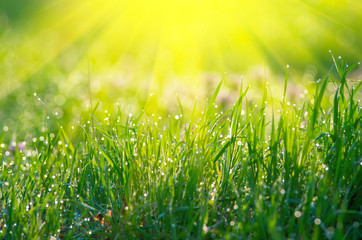 The sun's rays from above and green grass.