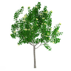 Young tree isolated