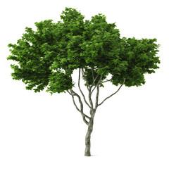Tree isolated.