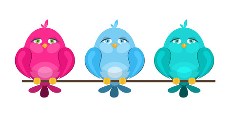 colorful cute birds sitting on a branch